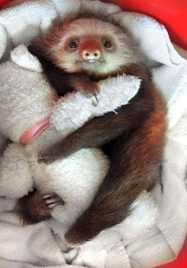 POTD_Sloth_1_2928048k